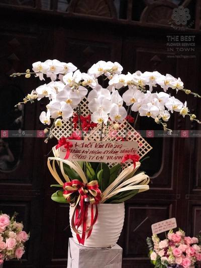Hồ Điệp Khai Trương - xinhtuoi.online