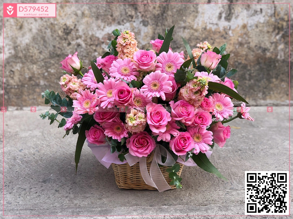 Gio800 - D579452 - xinhtuoi.online