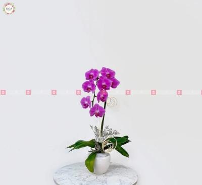 Bình Lan Hồ điệp - D199863 - xinhtuoi.online