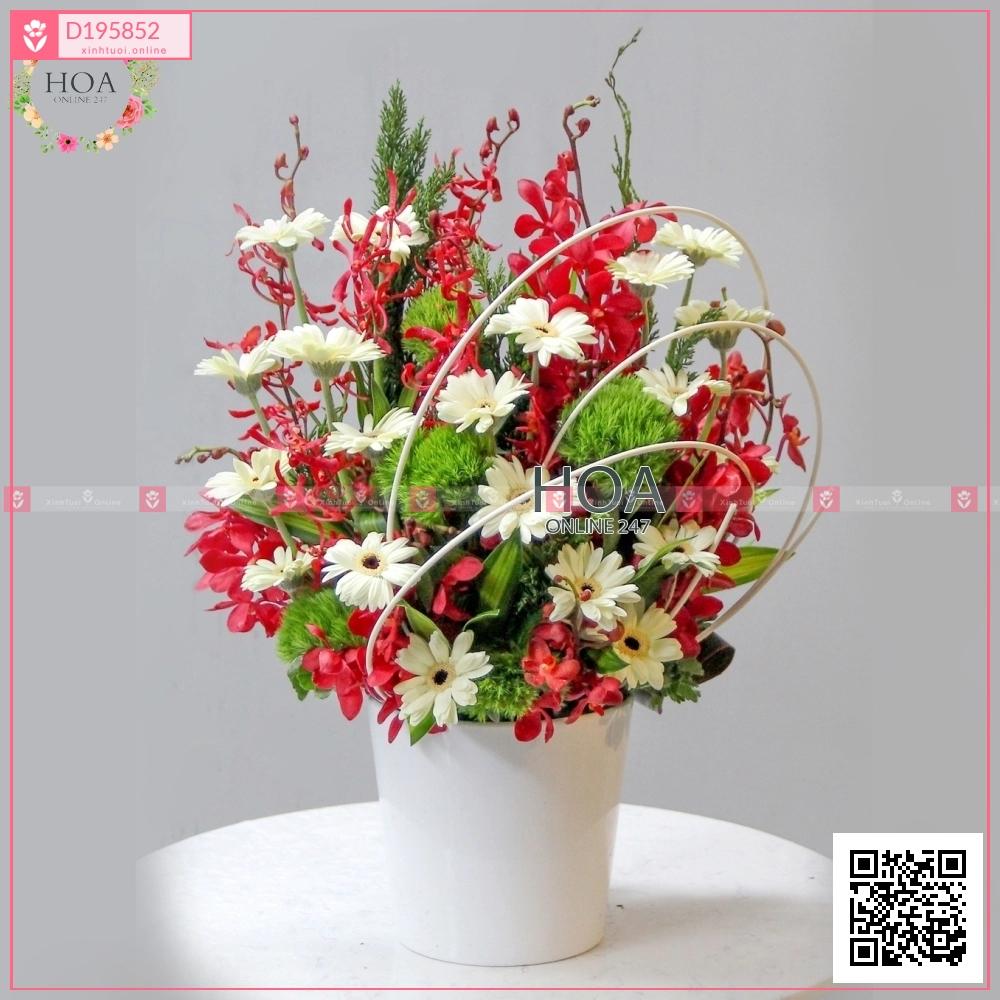 Thanh khiết - D195852 - xinhtuoi.online