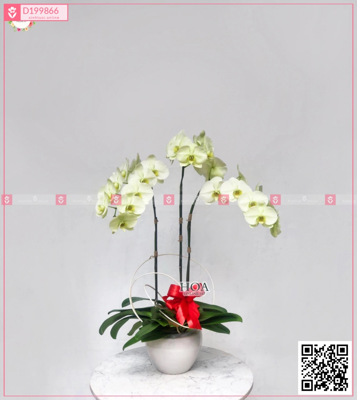 Bình Lan Hồ điệp - xinhtuoi.online