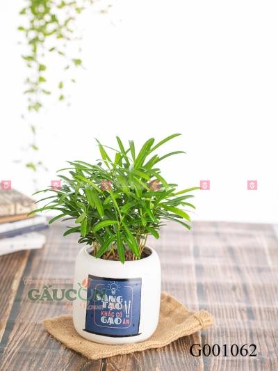 Vạn Niên Tùng Design - D581048 - xinhtuoi.online