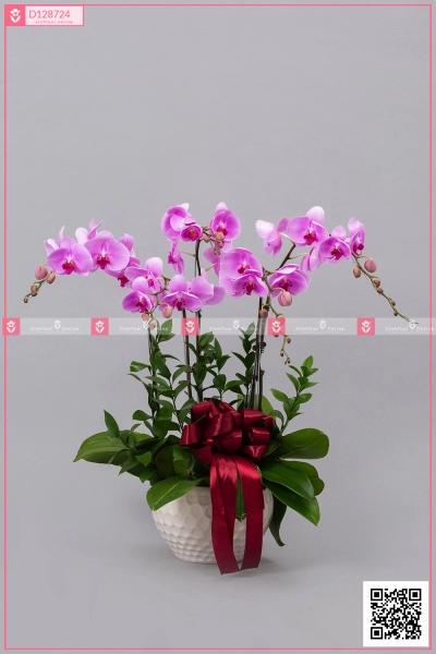 Hồ Điệp Hồng - D128724 - xinhtuoi.online