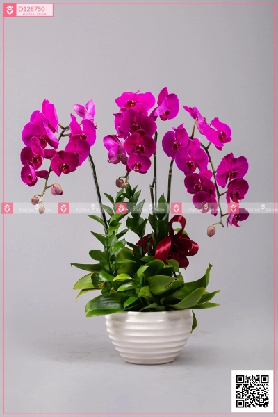 Hồ Điệp Cao Sang (03 cành) - D128750 - xinhtuoi.online