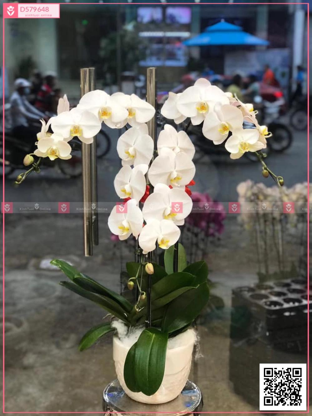 Xuân về - D579648 - xinhtuoi.online