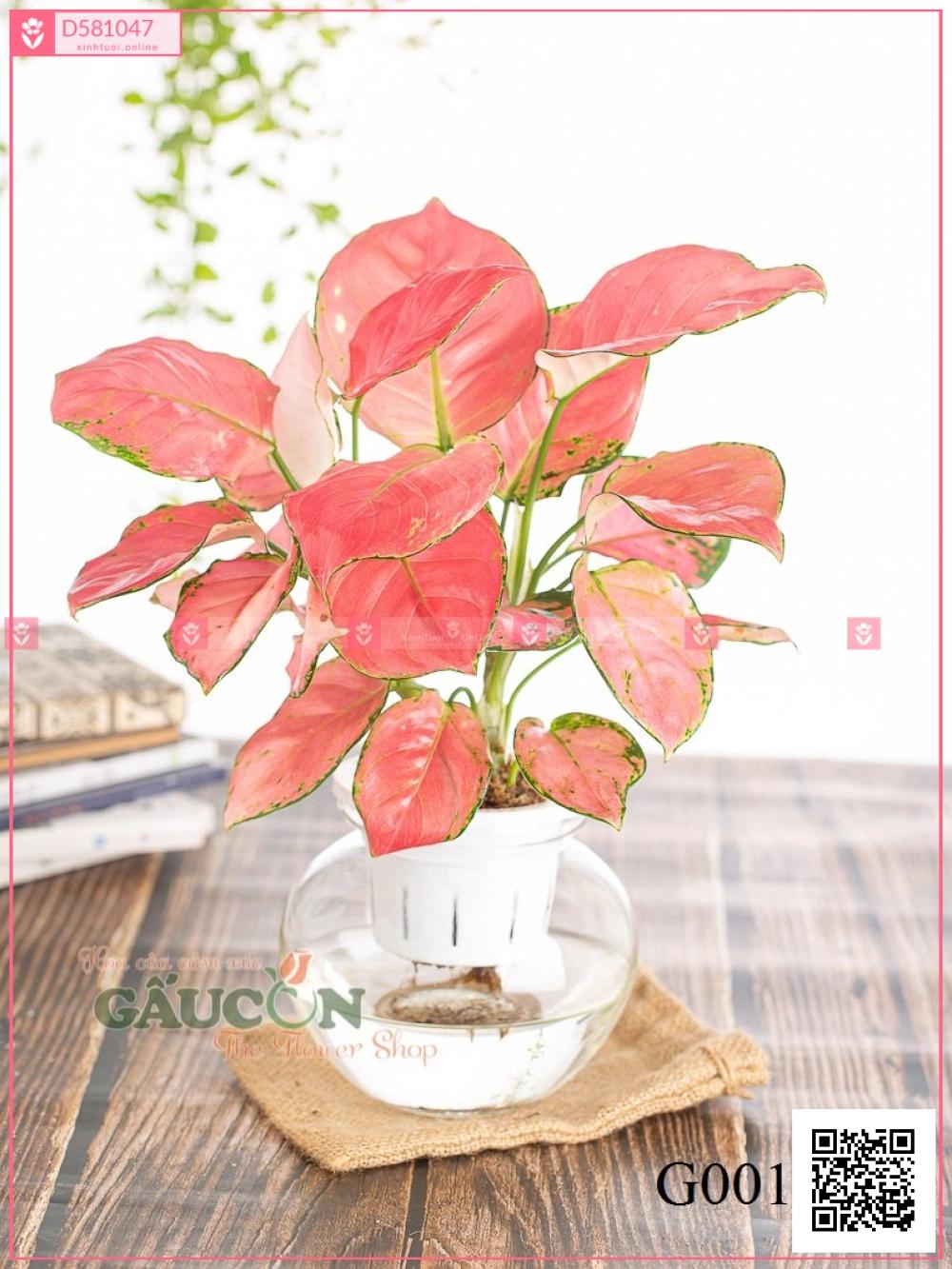 Hồng Phát Lộc - xinhtuoi.online