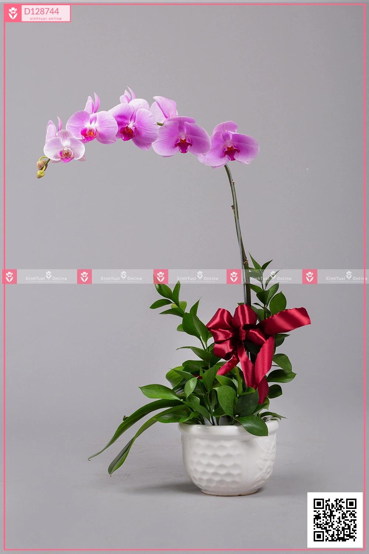 Hồ Điệp Cao Sang (01 cành) - D128744 - xinhtuoi.online