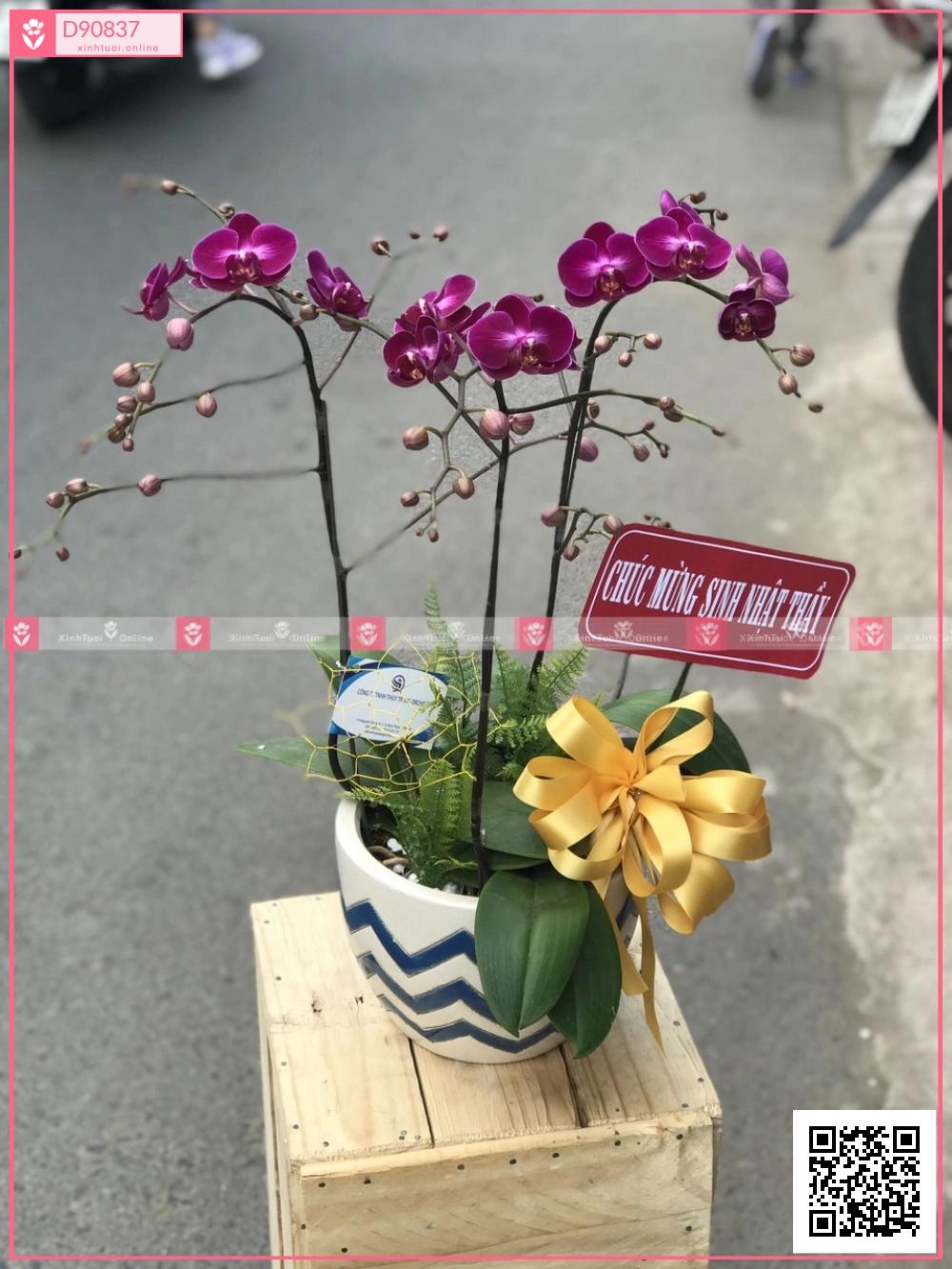 Lộc phát - D90837 - xinhtuoi.online